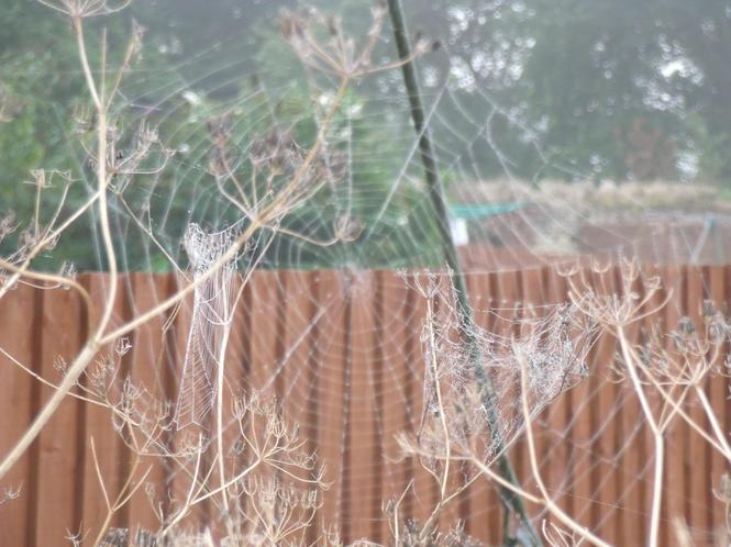 Misty spiders web!