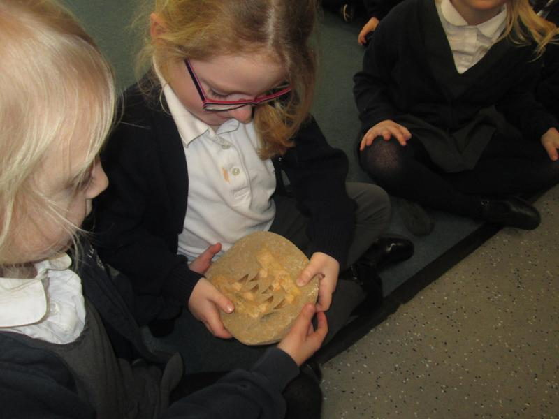 Looking at Fossils