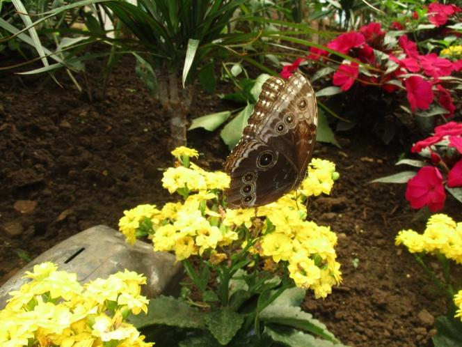Our class trip to The Butterfly House