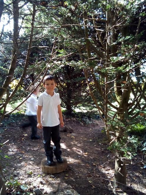 Enjoying finding different types of trees.