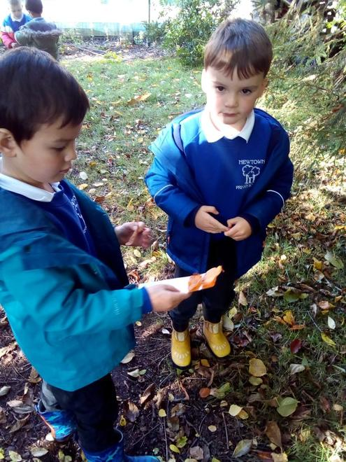 Matching the leaves to their colour chart.