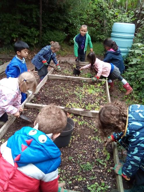Gardening in our raised beds and learning about parts of a plant.