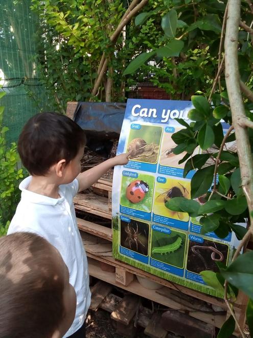 Identifying insects in our bug house.