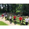 We saw lots of animals living along the way.
