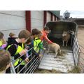 Morgan introduces the lamb.