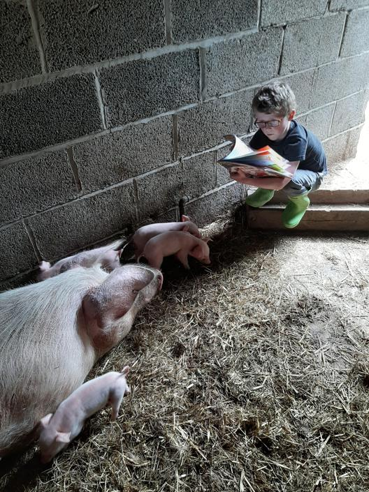The piglets won't settle and listen to Rowan read.