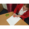 Leaf rubbings and identification