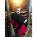 Andrew has a lamb 1