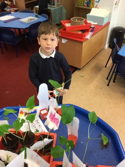 Talking about the height of our plants