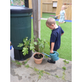 Watering the plants from rainwater collected