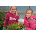 Harvesting very small carrots in gardening club for the Big Soup Share 2017.jpg