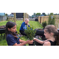 Gardening club planting in recycled tyres.jpg