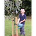 Watering the fruit trees