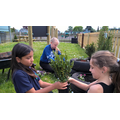 Year 5 help plant flowers donated by B&Q