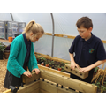 Children constructing wooden planters