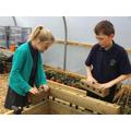 Children constructing wooden planters