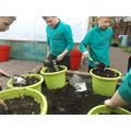 Planting spring bulbs.JPG