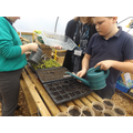Year 6 watering our new herbs