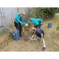 Year 4 2017 planting hedge.JPG