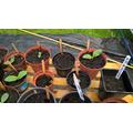 Pumpkin plants start to grow 6th July 2017