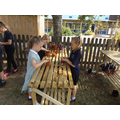 Year 4 plant their pumpkin seeds
