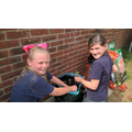 Planting strawberries a gardening club