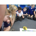 Today we programmed beebots with algorithms.
