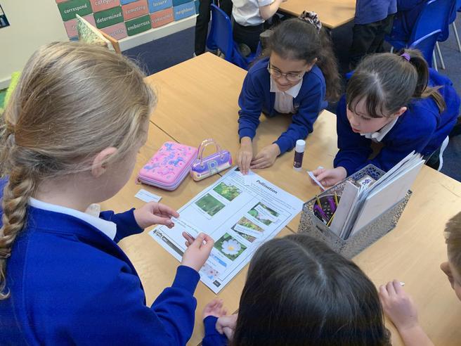 Identifying Plants