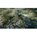 Ffion - tadpoles