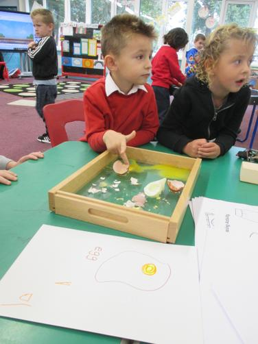 Observing cooked and uncooked eggs