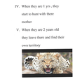 IC has researched the life cycle of a leopard