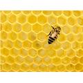 A honeycomb - using hexagons