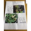 BB plants