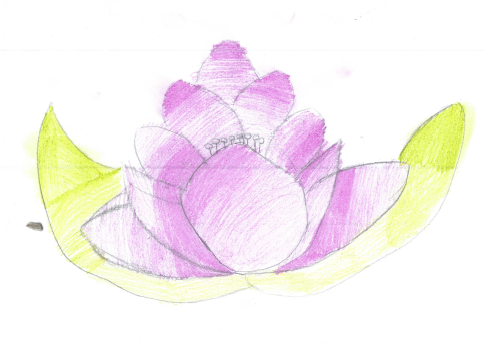 IC's beautiful lotus flower
