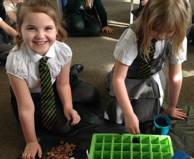 Unicorn Class exploring the germination process