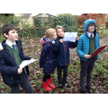 Out and about identifying trees using a key
