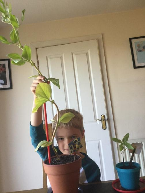 Wow! Look at Jack's plant.