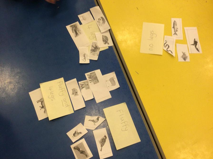 The children came up with their own animal groups.