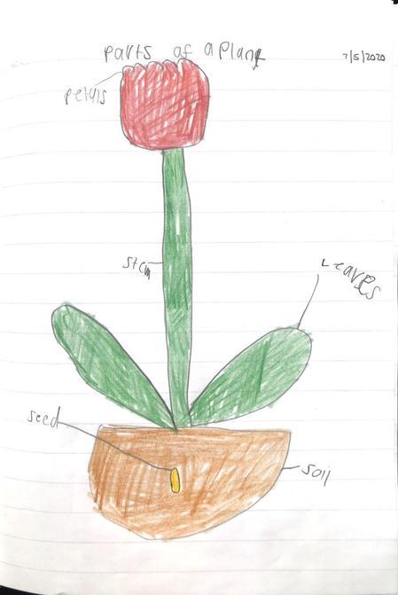 Lottie's fantastic flower with labels!