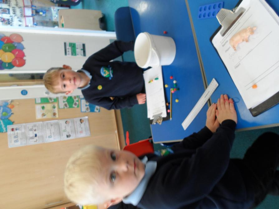 Measuring using cubes and rulers.