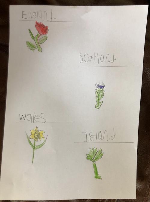Olivia Ar drew lovely national flowers!