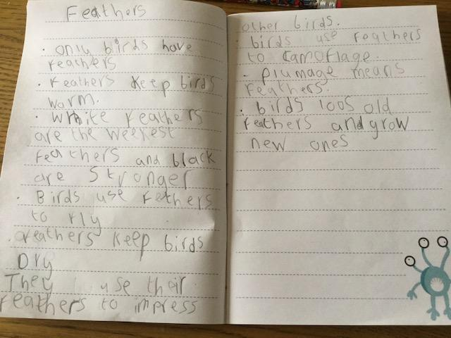 Jack's work about feathers