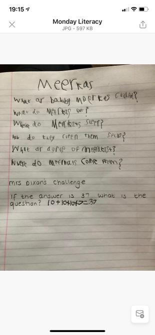 Sam's meerkat questions.