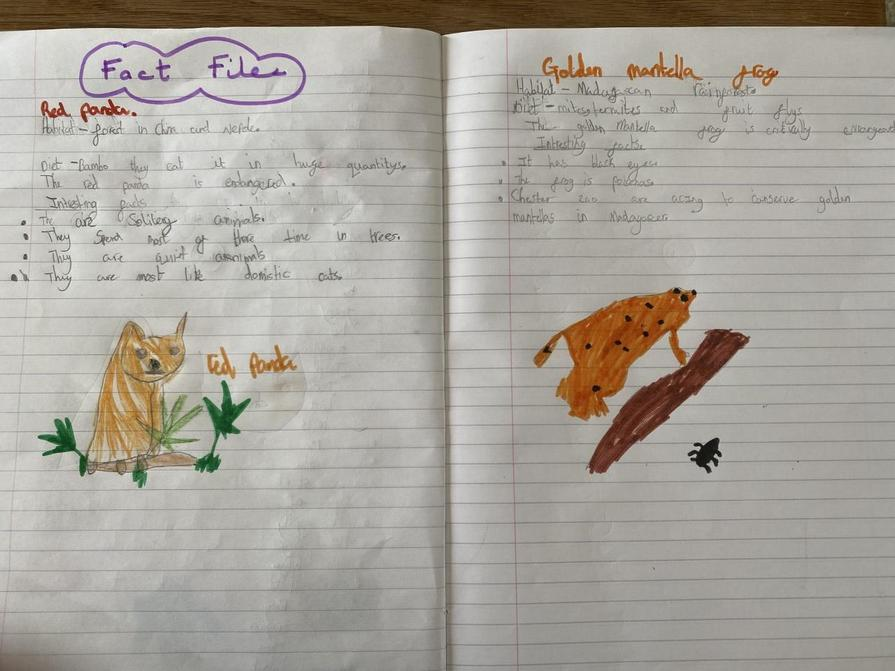 Sophia's animal fact file