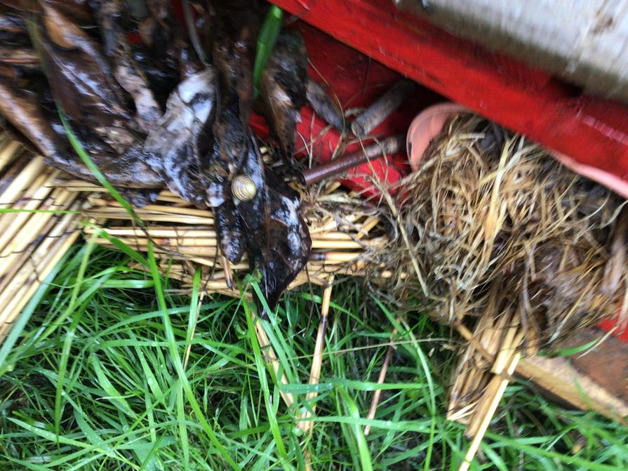Finding them in our bug hotel.