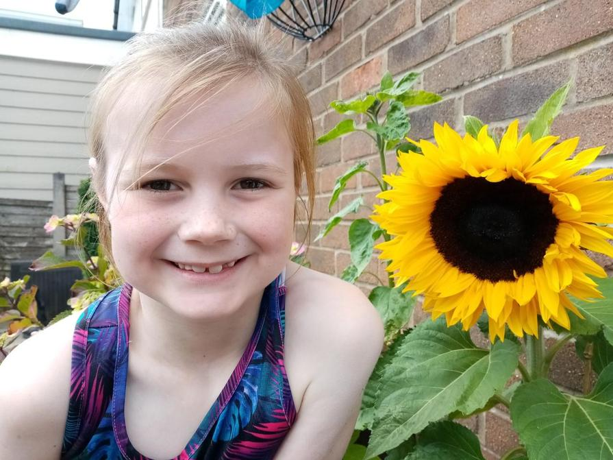 Lucy's sunflower she planted in class before lockdown