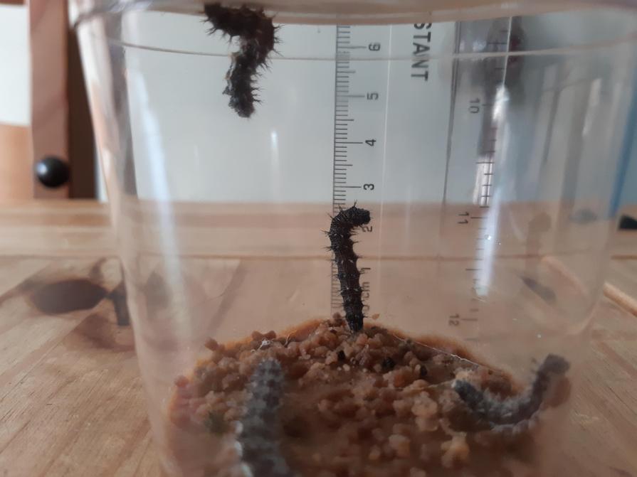 7.5 Still growing!