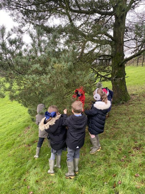 Choosing some pine cones.....