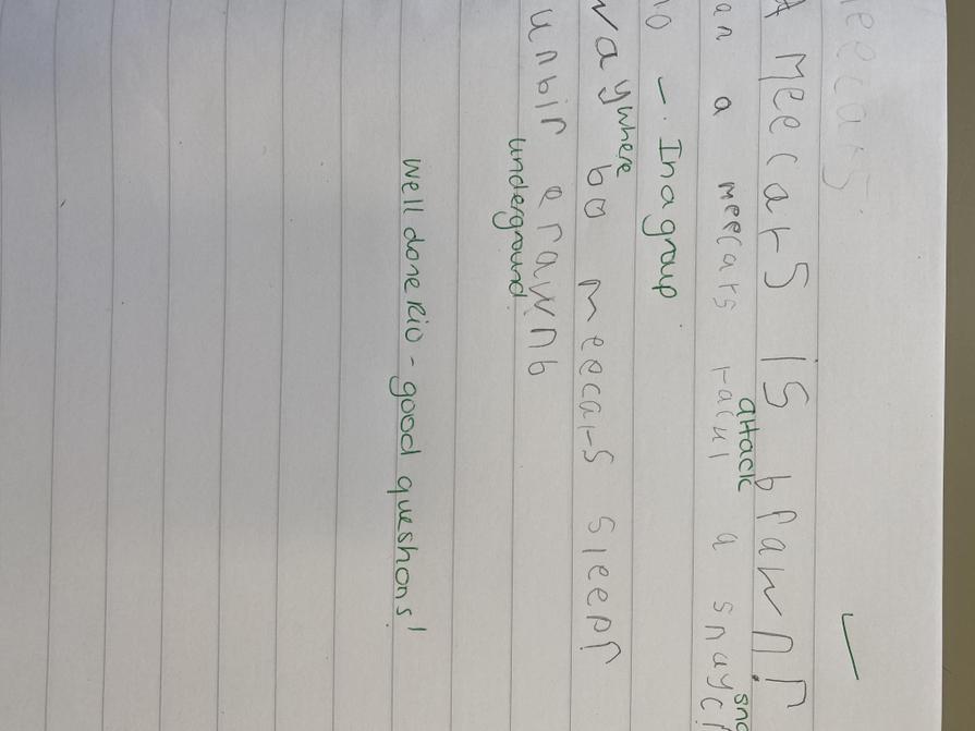 Meerkat writing.