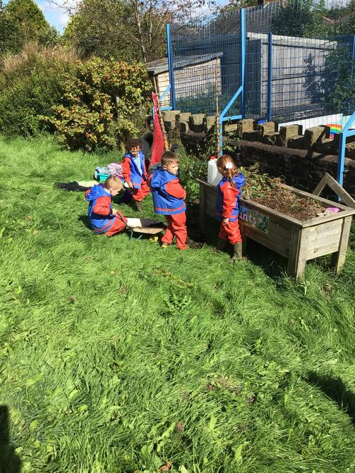 In the planter and making dens.